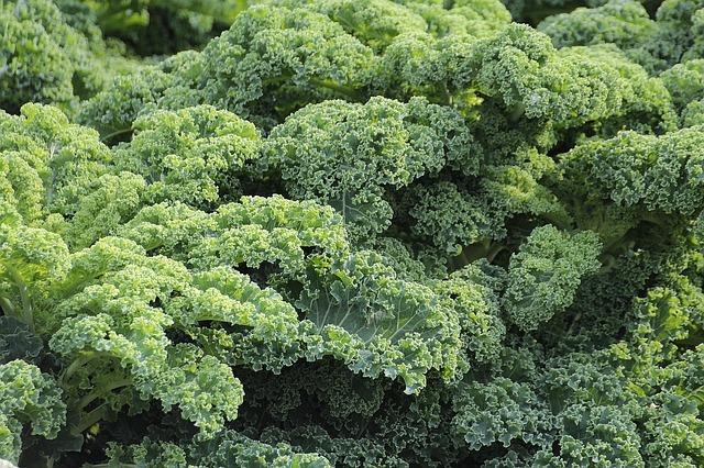 Best Cleansing Vegetables- Kale